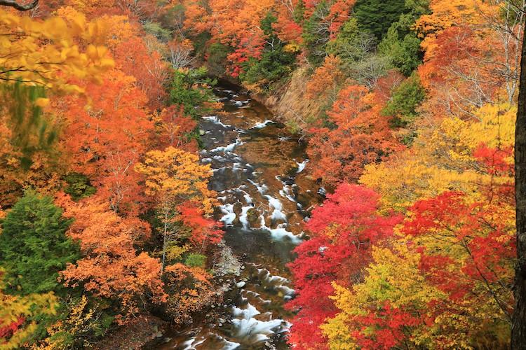 紅葉とグリーンタフが美しい奥志賀高原でのトレッキング